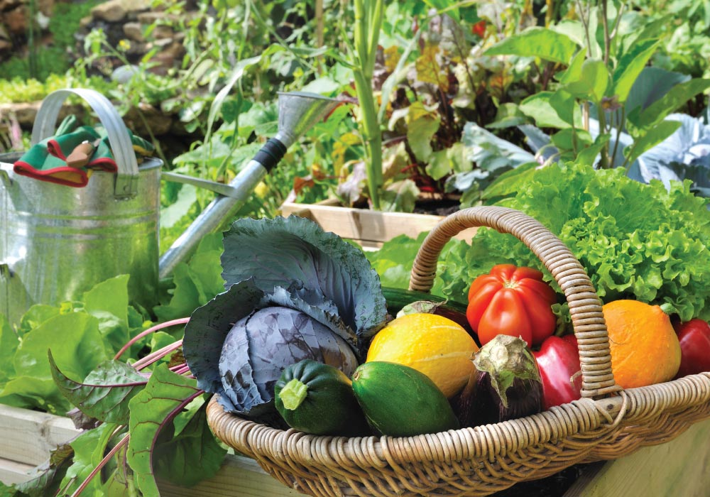 Plan your own home vegetable garden and get beautiful and tasty veggies like these