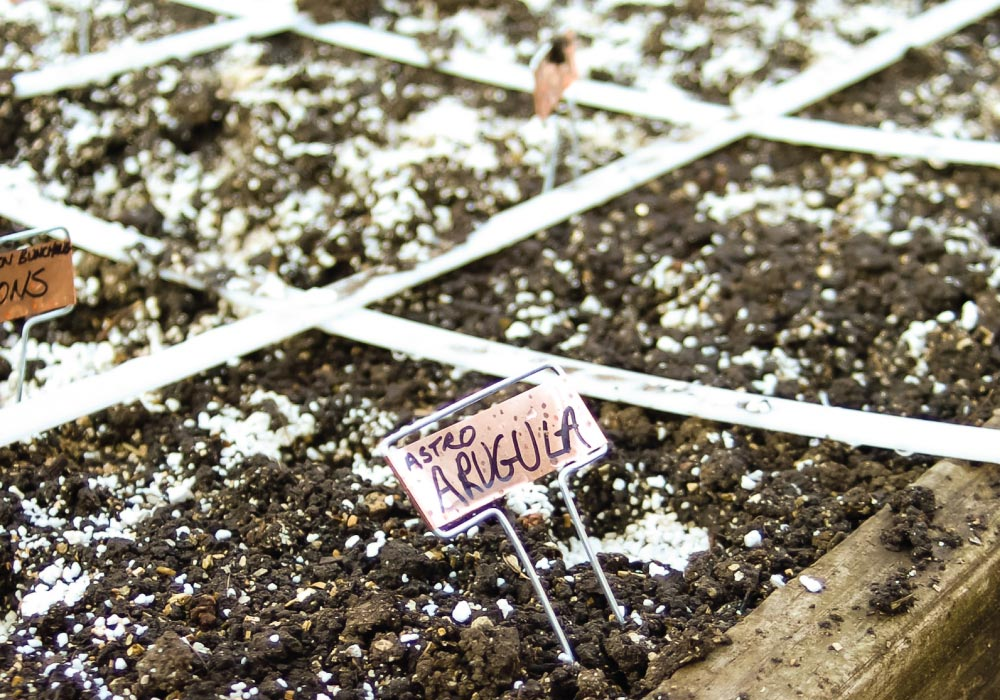 One way to plan a vegetable garden is to grow multiple veggies by diving your garden plot