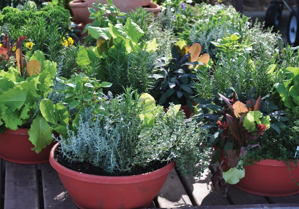 Backyard vegetable garden using the container method