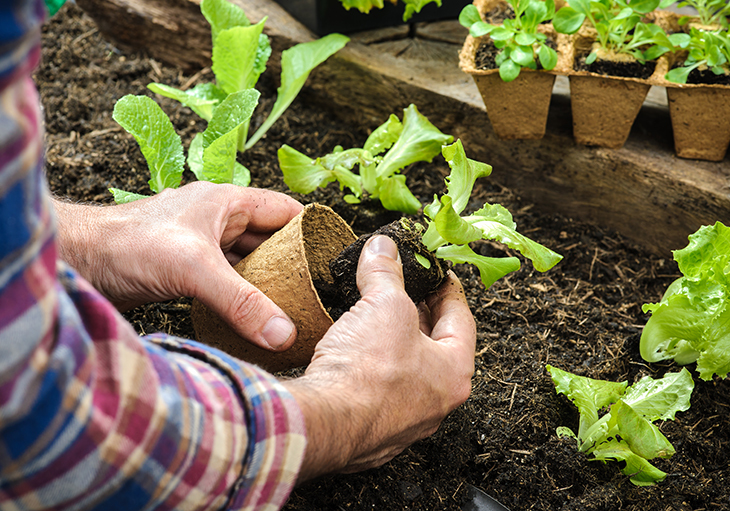 A man in a blue, red and tan flannel is building a garden by taking small lettuce seedlings and planting them in a row of soi